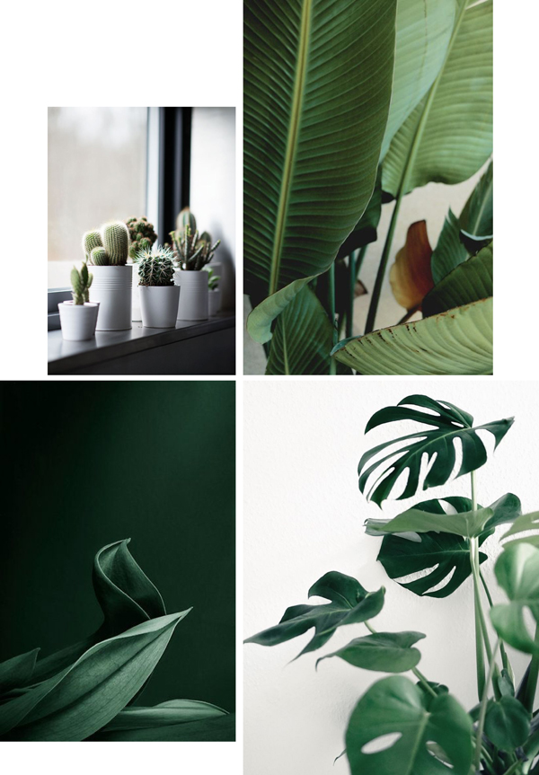 plants in the home, moodboard, trend, style, green, movement, urban jungle bloggers, planters, sky garden, function and form, architecture, sculptural plants